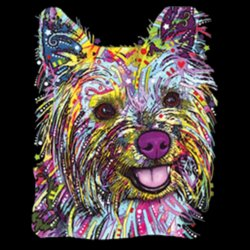 Colorful Yorkie